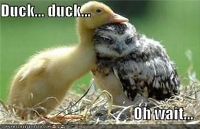 Duck... duck...  Oh wait...