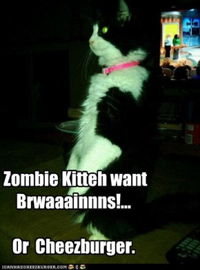 Zombie Kitteh want Brwaaainnns!...  Or  Cheezburger.