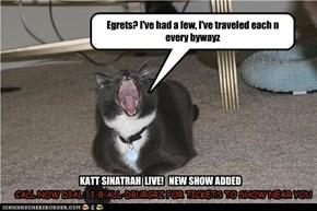 Katt Sinatrah sings d bluez