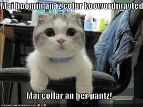 Mai hoomin an iz colur koowordinayted  Mai collar an her pantz!