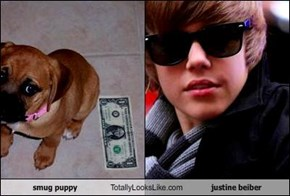 smug puppy Totally Looks Like justine beiber