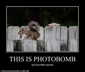 THIS IS PHOTOBOMB