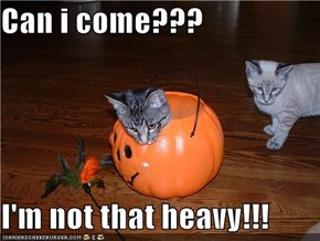 Can i come???  I'm not that heavy!!!
