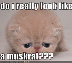 do i really look like  a muskrat???