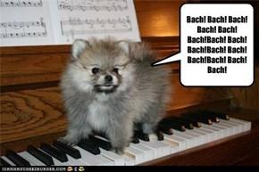 Bach! Bach! Bach! Bach! Bach! Bach!Bach! Bach! Bach!Bach! Bach! Bach!Bach! Bach! Bach!