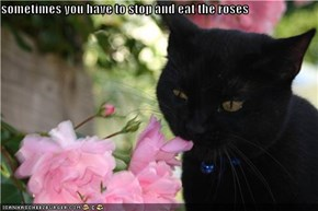 sometimes you have to stop and eat the roses