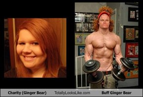 Charity (Ginger Bear) Totally Looks Like Buff Ginger Bear