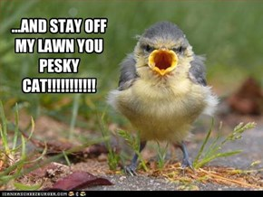 ...AND STAY OFF MY LAWN YOU PESKY CAT!!!!!!!!!!!