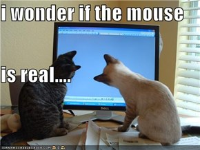 i wonder if the mouse is real....