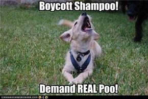 Boycott Shampoo!