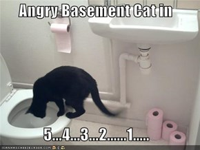 Angry Basement Cat in  5...4...3...2......1.....