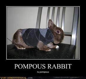 POMPOUS RABBIT