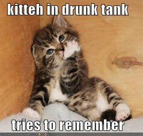 kitteh in drunk tank  tries to remember