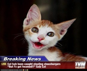 "Breaking News - Cat hab been caught stealing cheezburgers ""But I'z got fwamed!!"" Saiz Cat"