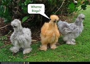 Wherez Ringo?
