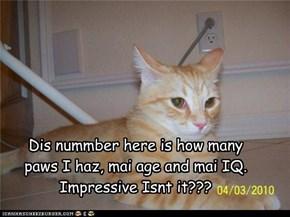 Mai IQ