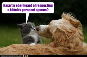 Hasn't u eber heard of respecting a kitteh's personal spaces?