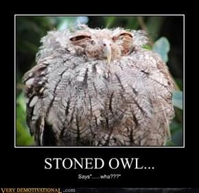 STONED OWL...