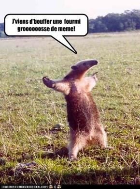 J'viens d'bouffer une  fourmi groooooosse de meme!