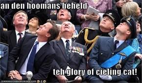 an den hoomans beheld  teh glory of cieling cat!