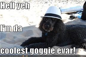 Hell yeh I'm da coolest goggie evar!