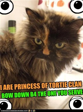 I ARE PRINCESS OF TORTIE CLAN