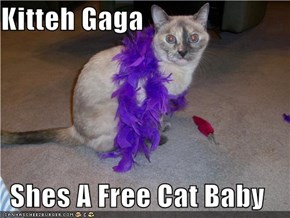 Kitteh Gaga  Shes A Free Cat Baby
