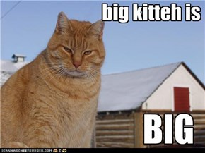 big kitteh is