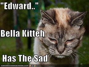 """Edward.."" Bella Kitteh  Has The Sad"