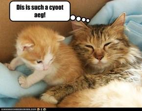 Bebe Cat Luv!