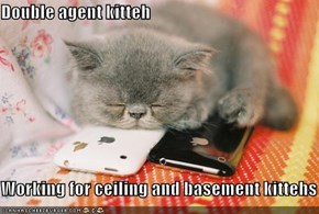 Double agent kitteh  Working for ceiling and basement kittehs