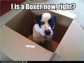 I is a Boxer now, right?