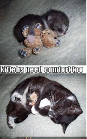 kittehs need comfort too