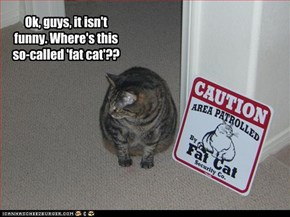 Ok, guys, it isn't funny. Where's this so-called 'fat cat'??