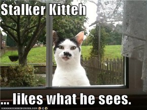 Stalker Kitteh  ... likes what he sees.