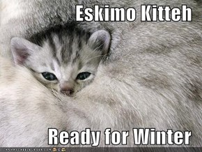 Eskimo Kitteh  Ready for Winter