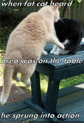 when fat cat heard oreo,was on the table, he sprung into action