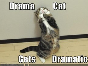 Drama          Cat            Gets         Dramatic