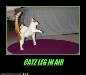 CATZ LEG IN AIR