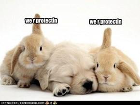 we r protectin