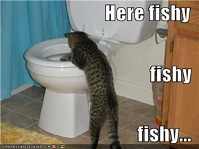 Here fishy fishy fishy...
