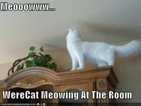 Meooowww...  WereCat Meowing At The Room
