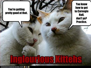 Inglourious Kittehs