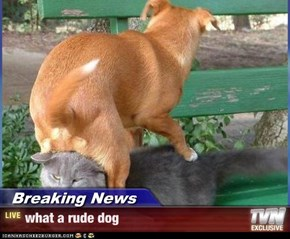Breaking News - what a rude dog