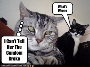 Kitteh Condom Troubles