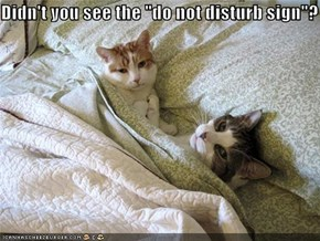 "Didn't you see the ""do not disturb sign""?"