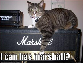 I can has marshall?
