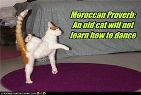 Moroccan Proverb: An old cat will not learn how to dance