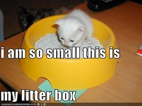 i am so small this is my litter box