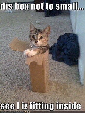 dis box not to small...  see I iz fitting inside